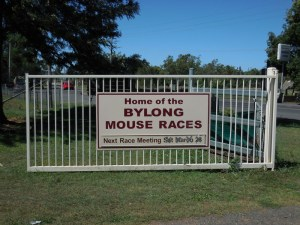 Bylong Mouse Races - next date indetermanent