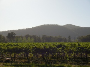 Mudgee vineyard morning