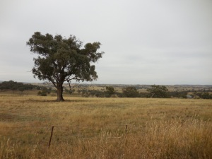 NSW country scene