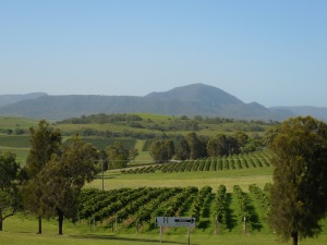 Hunter vineyard scene