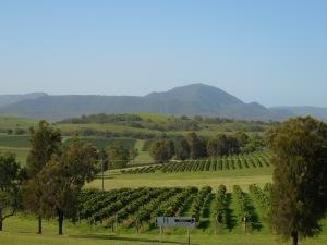 Hunter vineyard scene