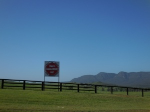 No mines here - race horse owners untied