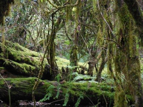 Barrington rainforrest