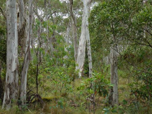 Barrington trees 2