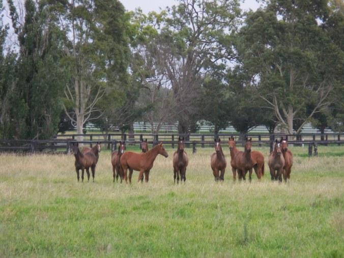 Hunter horses 2
