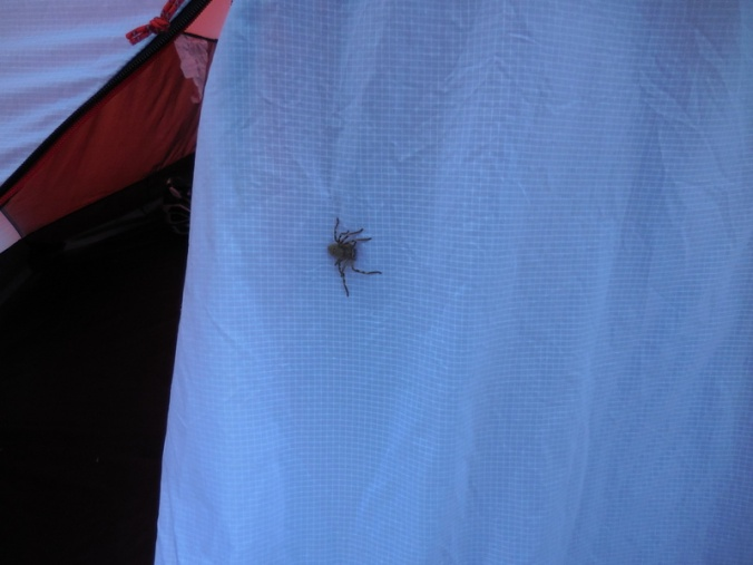 Huntsman on the tent