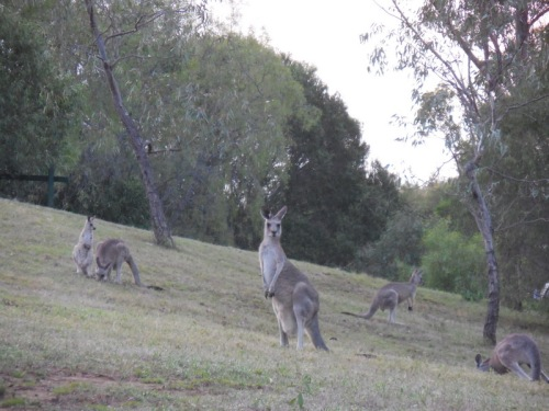 Morning roos