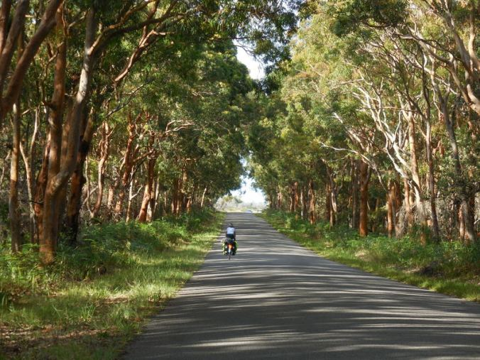 Nancy riding the red gum forest