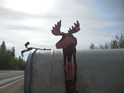 Moose Mail Box