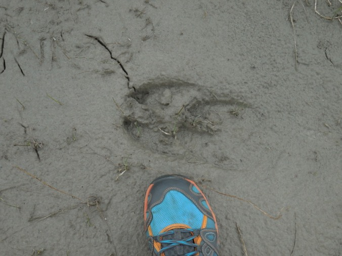 Moose print and my foot