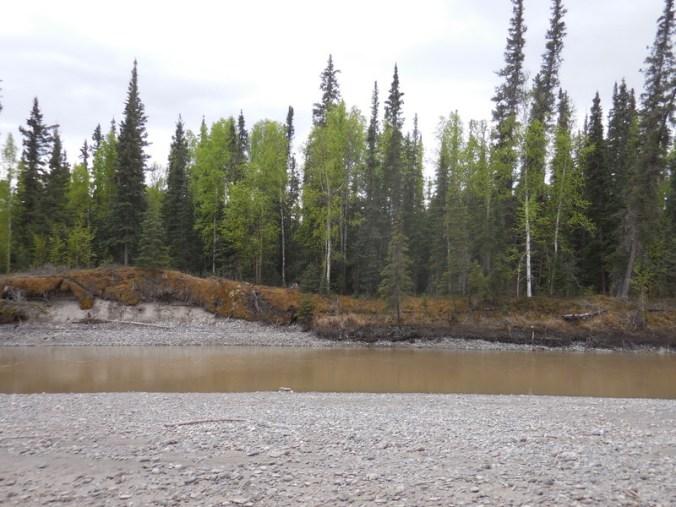 Tanana River 2