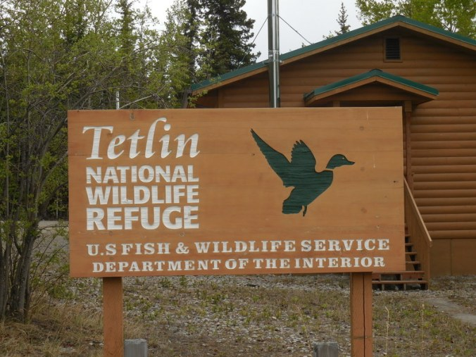 Tetlin Wildlife