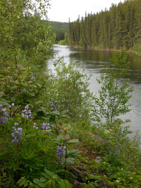 Dease River view 2