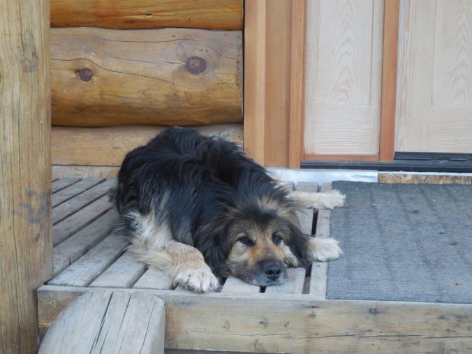 Guard dog at Arctic Divide