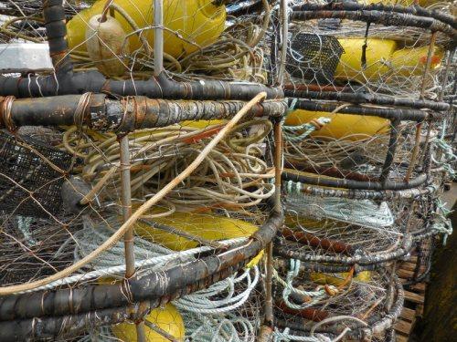 PR crab pots 1