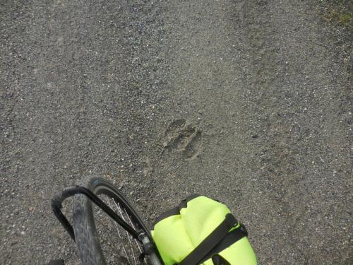 Random stop moose track