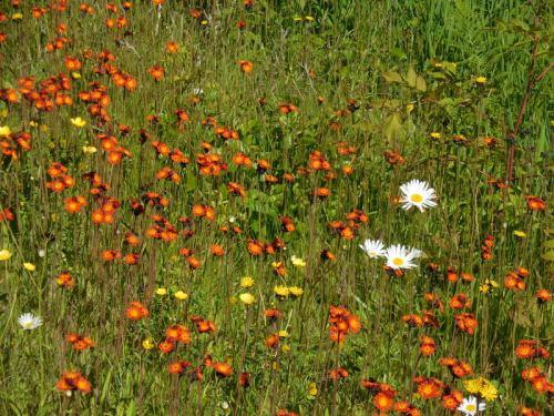 Roadside flowers 1