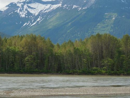 Skeena River 2
