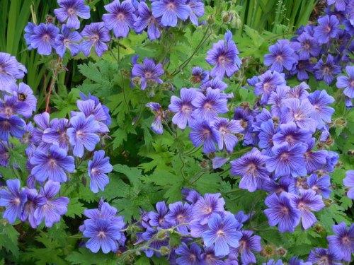 Sunken Gardens flowers 1