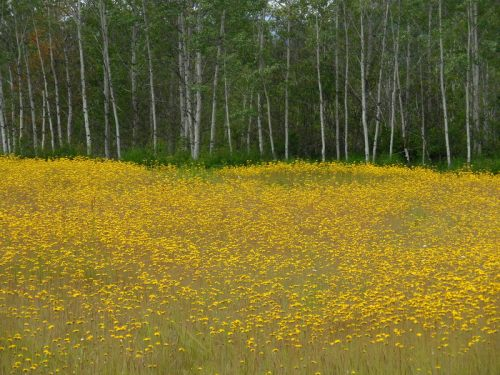 Wildflowers and britch 1