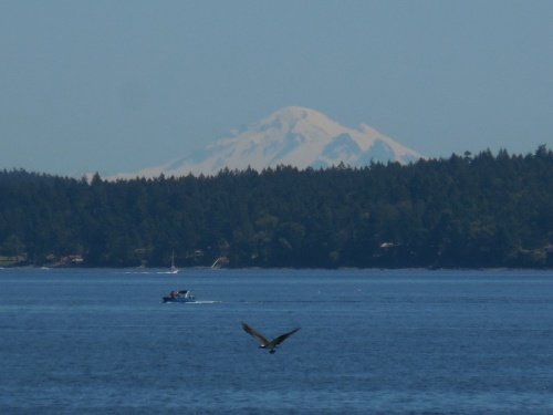 A mountain, a boat and an osprey w fish