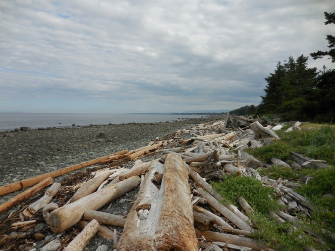 Driftwood near our RV Park 1