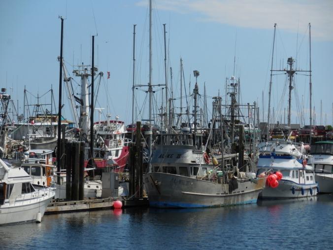 Port Campbell River Port