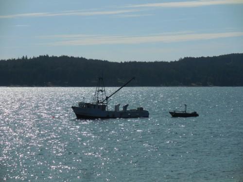 Union Bay scene 3