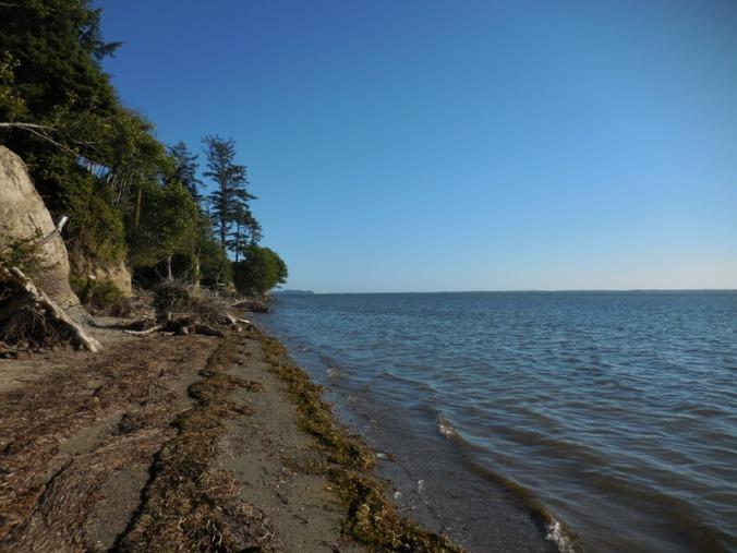 Willapa Bay 5
