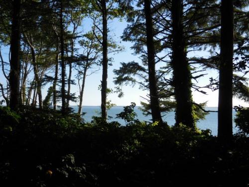 Willapa Bay 6