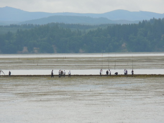Willapa Bay oyster workers