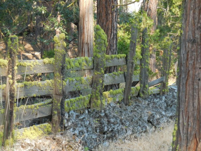 Fence on Highway 89