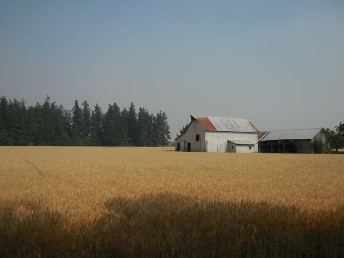 Grain and barn 1