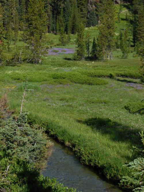 King Creek meadow 1