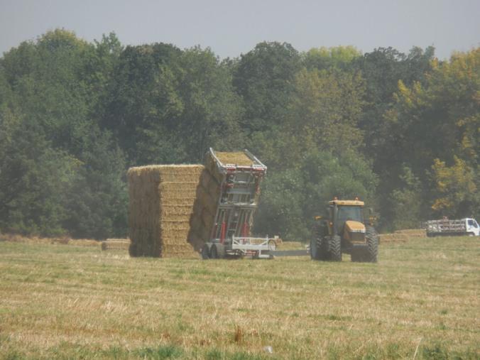 Making Great wall o' wheat