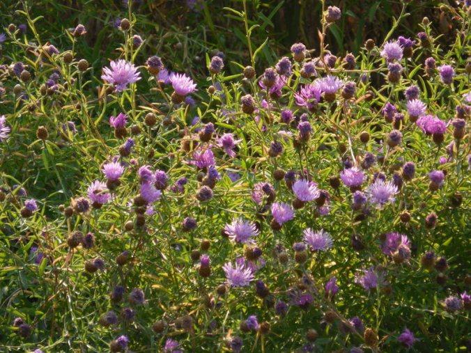 Morning flowers 2
