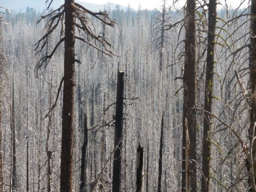 Remains of old forest fire 2
