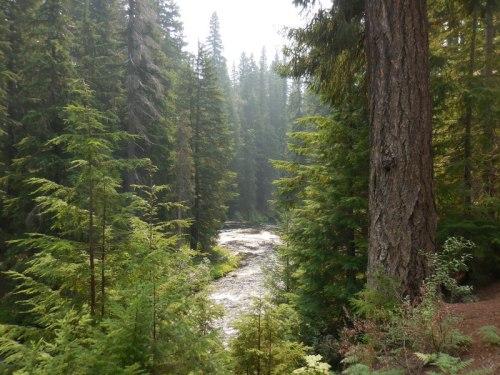 Rogue River 7