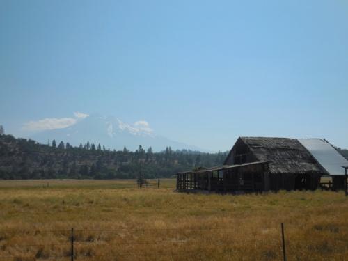 Shasta and farm in sun