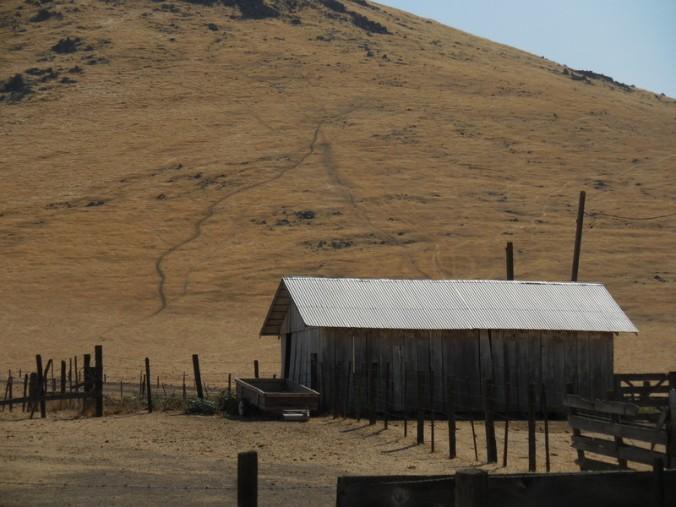 Country scene 1
