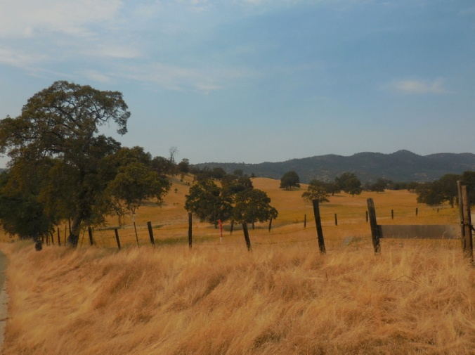 Country scene from today 1
