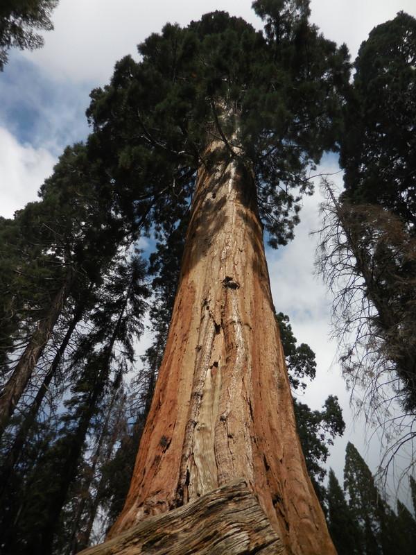 Sequoia 14