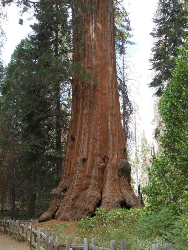 Sequoia 19