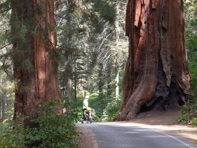 Sequoia views 11