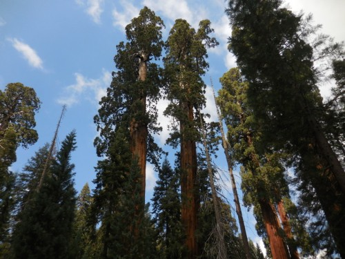 Sequoia views 7
