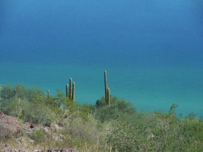 Bay of Concepcion cacti