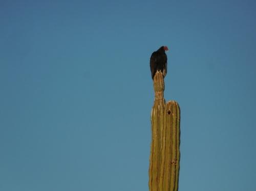 Bird on cactus 1