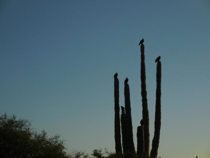 Birds on cactus 1