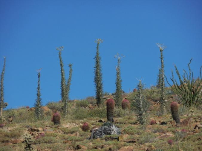 Cacti garden 1