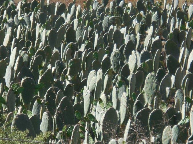 Cactus farm 2